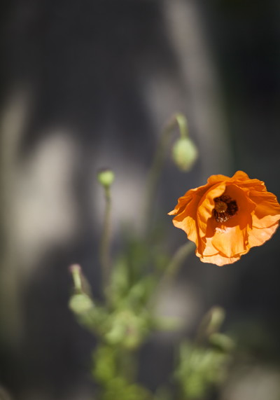fotograf-ausbildung-studium-fotografie-03